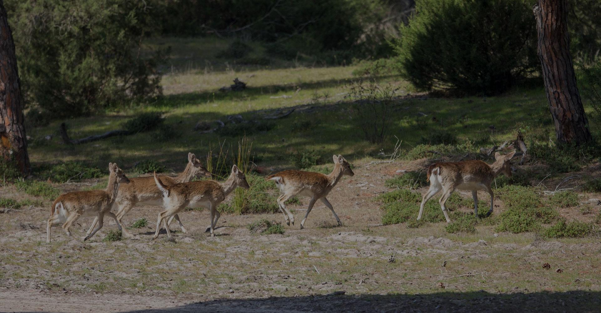 Visitas Doñana